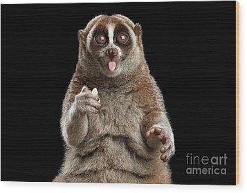 Close-up Lemur Slow Loris Isolated Black Background Wood Print