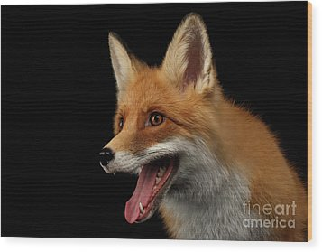 Closeup Portrait Of Smiled Red Fox Isolated On Black  Wood Print