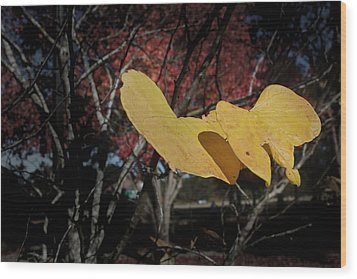 Colors Of Fall Wood Print by Joseph G Holland