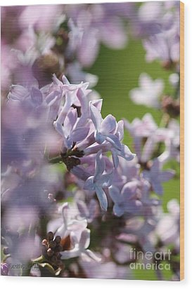 Common Purple Lilac Wood Print by J McCombie