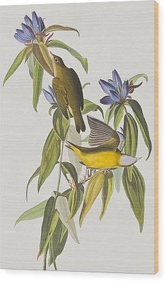 Connecticut Warbler Wood Print