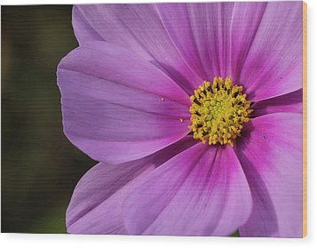 Wood Print featuring the photograph Cosmos by Elvira Butler