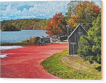 Cranberry Bog Wood Print by Gina Cormier