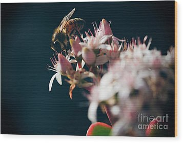 Wood Print featuring the photograph Crassula Ovata Flowers And Honey Bee  by Sharon Mau