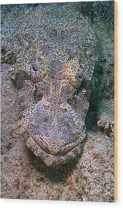 Crocodile Fish Wood Print by Joerg Lingnau