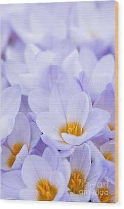 Crocus Flowers Wood Print by Elena Elisseeva