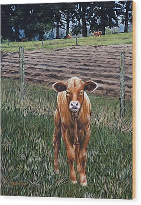 Curious Calf Wood Print by Rick McKinney