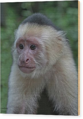 Curious Capuchin Wood Print by Larry Linton
