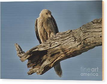 Wood Print featuring the photograph Curious by Douglas Barnard