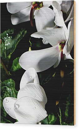 Wood Print featuring the photograph Cyclamen by Mindy Newman