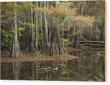Cypress Trees In Caddo Lake Wood Print by Iris Greenwell