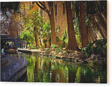Cypress Trees In The Riverwalk Wood Print by Iris Greenwell