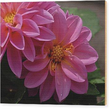 Dahlia Beauty Wood Print by Ronda Ryan