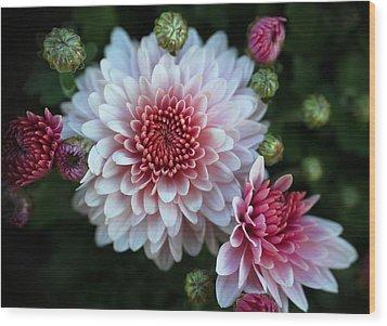 Dahlia Burst Wood Print by Ronda Ryan