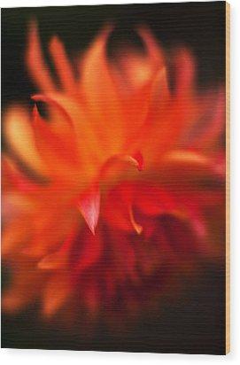 Dahlia Flame Wood Print by Mike Reid