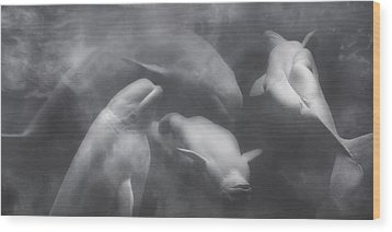 Dancing Belugas  Wood Print by Betsy Knapp