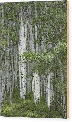 Delicate Aspens. Colorado Wood Print