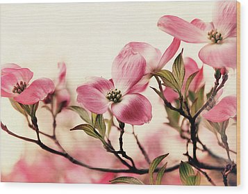 Wood Print featuring the photograph Delicate Dogwood by Jessica Jenney