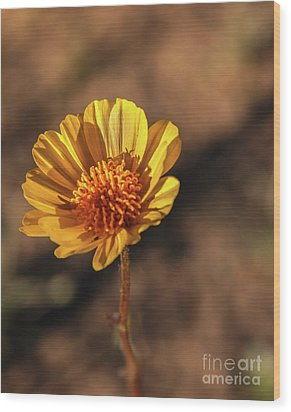 Wood Print featuring the photograph Desert Sunflower by Robert Bales
