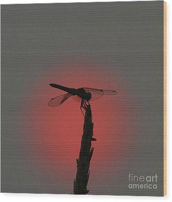 Dragonfly Sunset Wood Print
