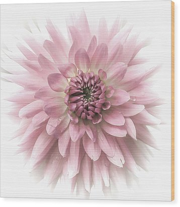 Wood Print featuring the photograph Dreamy Dahlia by Julie Palencia