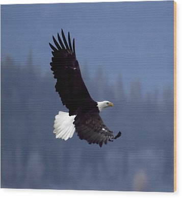 Eagle In Flight Wood Print by Clarence Alford