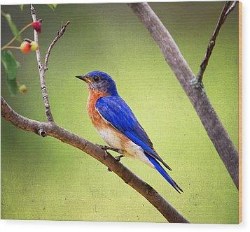 Eastern Bluebird Wood Print by Al  Mueller