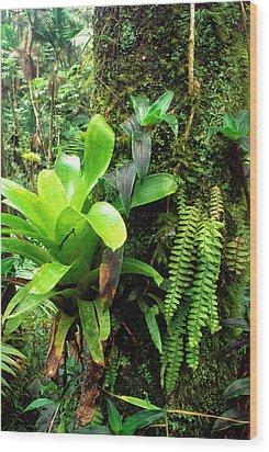 El Yunque National Forest Wood Print by Thomas R Fletcher