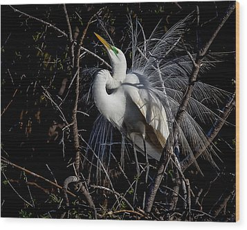 Wood Print featuring the photograph Elegant Egret by Kelly Marquardt