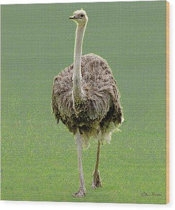 Emu Wood Print by Ellen Henneke