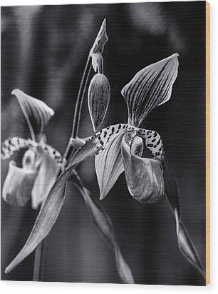 Encinitas Orchid Wood Print by Erik Poppke