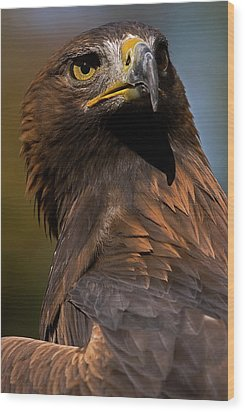 European Golden Eagle Wood Print