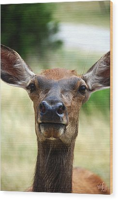 European Red Deer Wood Print by Thea Wolff