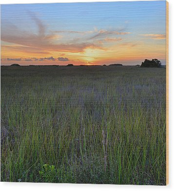Wood Print featuring the photograph Everglades Sunset by Stephen  Vecchiotti