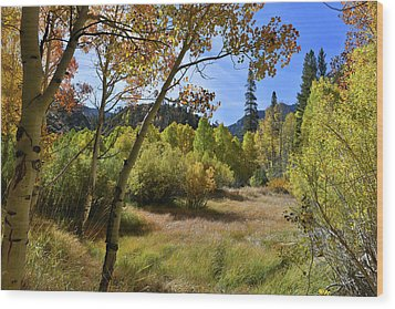 Wood Print featuring the photograph Fall In Bishop Creek by Dung Ma