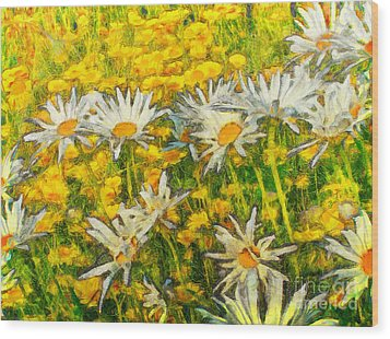 Field Of Daisies Wood Print by Claire Bull