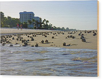 Fighting Conchs At Lowdermilk Park Beach In Naples, Fl Wood Print by Robb Stan