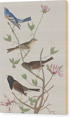Finches Wood Print
