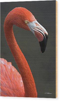 Flamingo Wood Print by Christopher Holmes