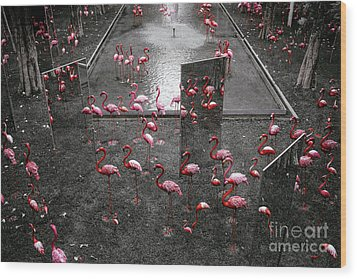 Wood Print featuring the photograph Flamingo by Setsiri Silapasuwanchai