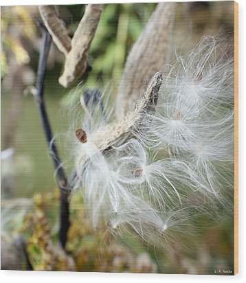 Flight Of The Milkweed Wood Print by Lauren Radke