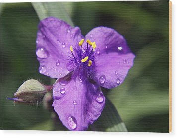 Wood Print featuring the photograph Flower by Heidi Poulin