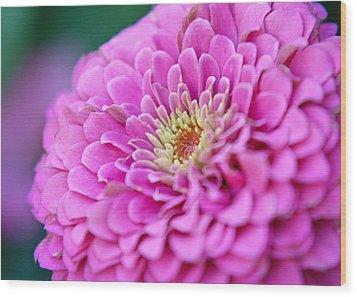 Flower Macro Wood Print by Edward Myers