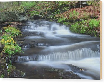 Forest Stream And Marsh Marigolds Wood Print by John Burk