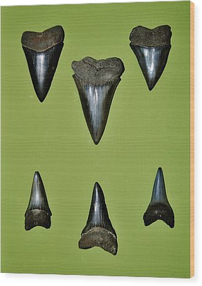 Fossil Mako Shark Teeth Wood Print by Werner Lehmann