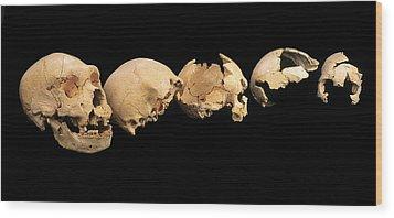 Fossilised Skulls, Sima De Los Huesos Wood Print by Javier Truebamsf