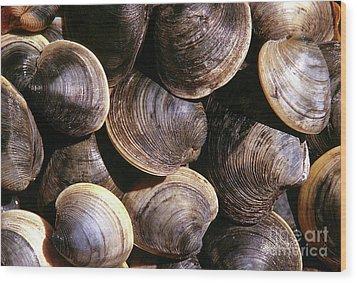 Fresh Clams Wood Print by John Greim