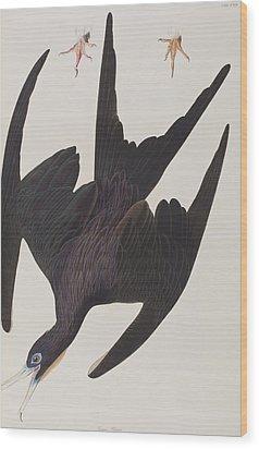 Frigate Pelican Wood Print by John James Audubon