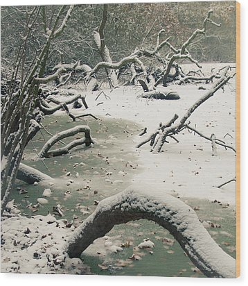 Frozen Fallen Sq Wood Print by Andy Smy