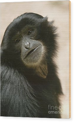 Funky Gibbon Wood Print by Andrew  Michael